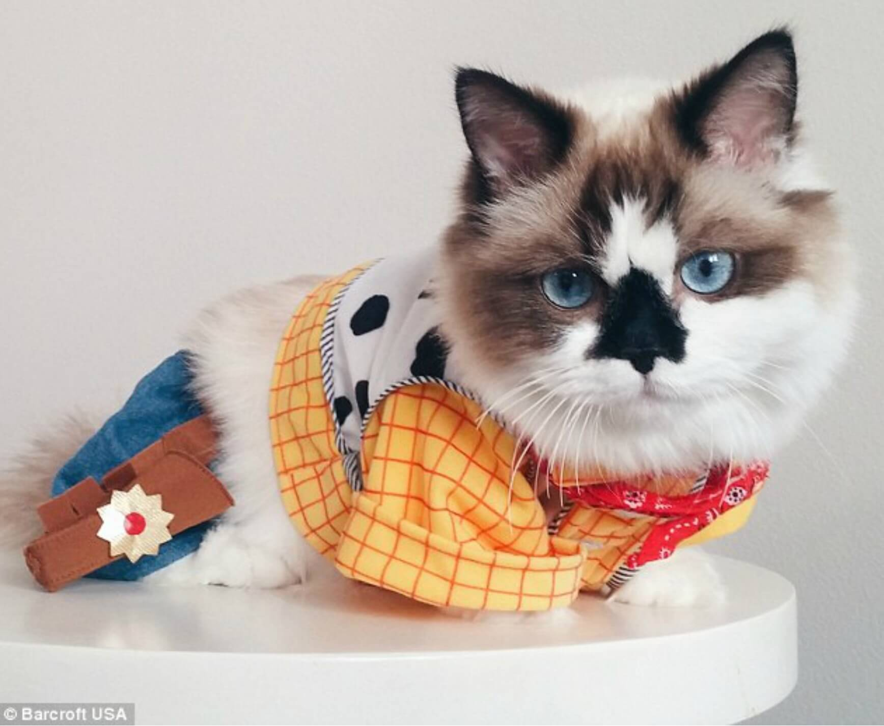 Toy Story's Woody Cat Costume