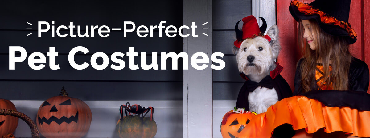 Pawsome Dog Costumes for Halloween