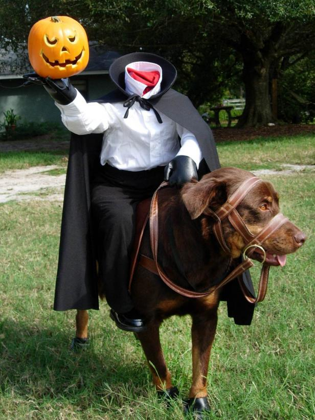 Headless Horseman Dog Costume DIY