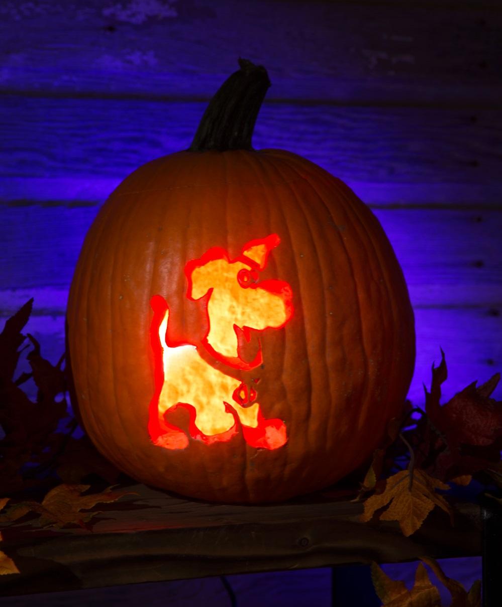 Puppy Scooby-Doo Pumpkin