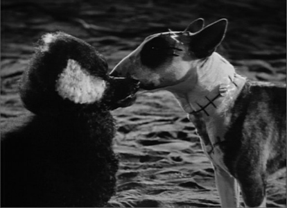 frankenweenie screencap & Frankenweenie: A Tim Burton Film - Halloween Costumes Blog