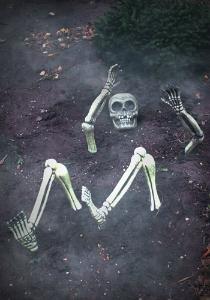 skeleton pieces