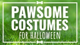 Pawsome Dog Costumes for Halloween [Costume Guide]
