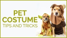 These Pet Costume Tips and Tricks are Doggone Purrfect [How to Halloween 2020]
