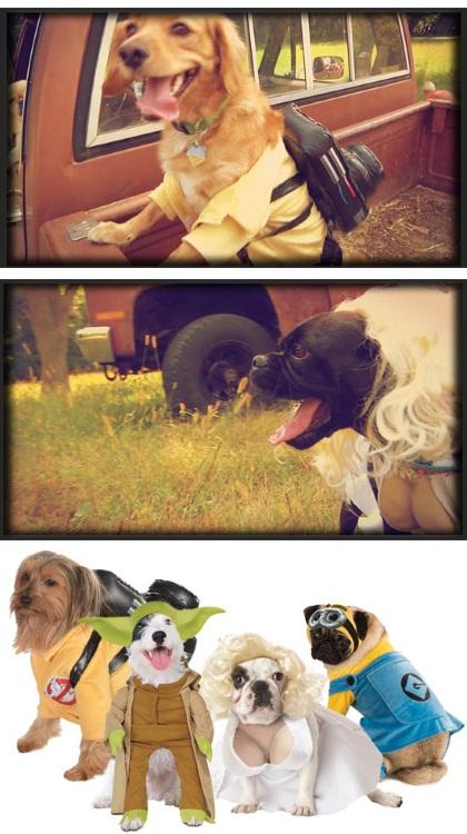 Pop Culture Dog Costume Ideas