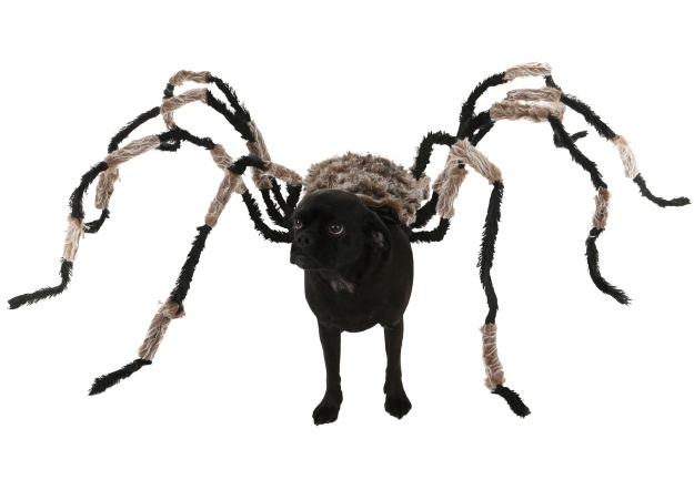 diy spider dog costume for halloween