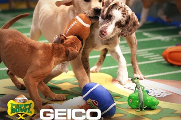 Puppy Bowl 2015