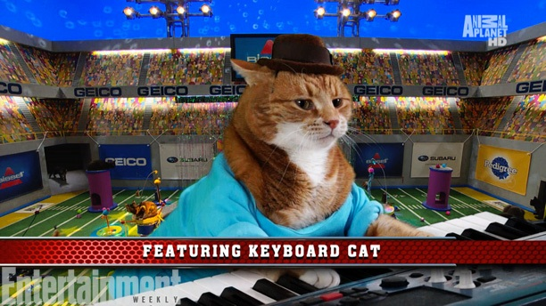 Keyboard Cat at the Puppy Bowl