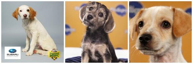 Puppy Bowl MVPs
