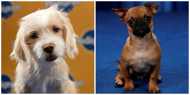 MVPs in the Puppy Bowl