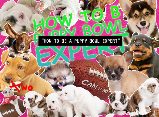 How To Be A Puppy Bowl Expert
