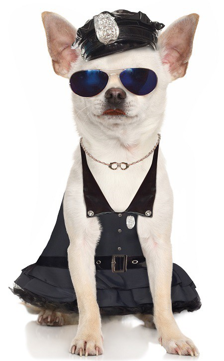 Pretty Officer Chihuahua Pet Costume