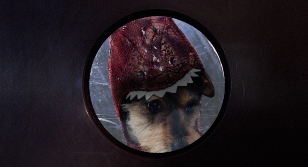 Jurassic Pup Window Nose Fog Scene