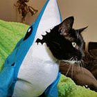 Left Shark costume for 2015