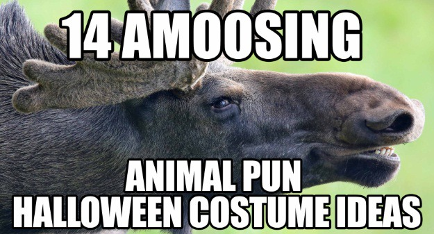 14 animal pun costume ideas
