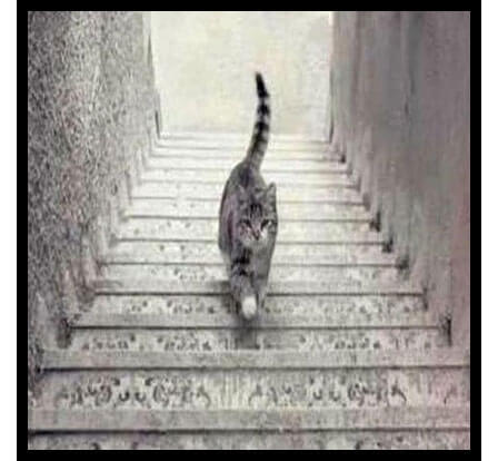 Cat on the Stairs Sparks Controversy