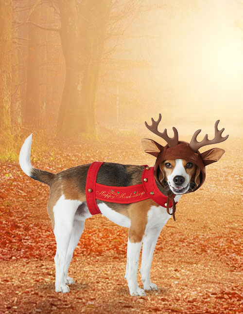 Dog Deer Costume