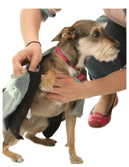 Most of our dog costumes are designed to fit like a jacket so just like human costume apparel youu0027ll want to start by putting in one paw at a time.  sc 1 st  Halloween Costumes & Pet Costumes - Cat u0026 Dog Halloween Costumes - HalloweenCostumes.com