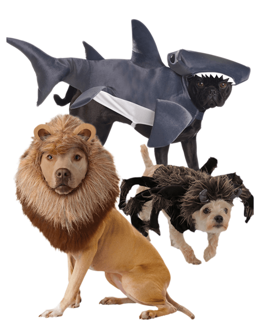 Animal Dog Costumes