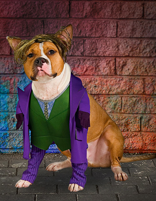 Joker Dog Costume
