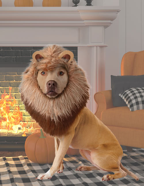 50b57cbe7b6 Dogs Lion Costume &
