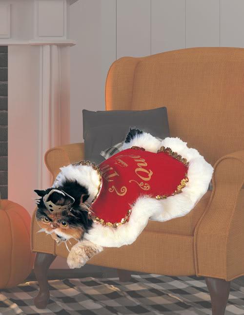 Cat Robe