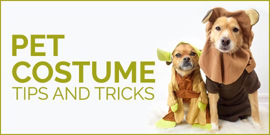 Pet Costume Tips