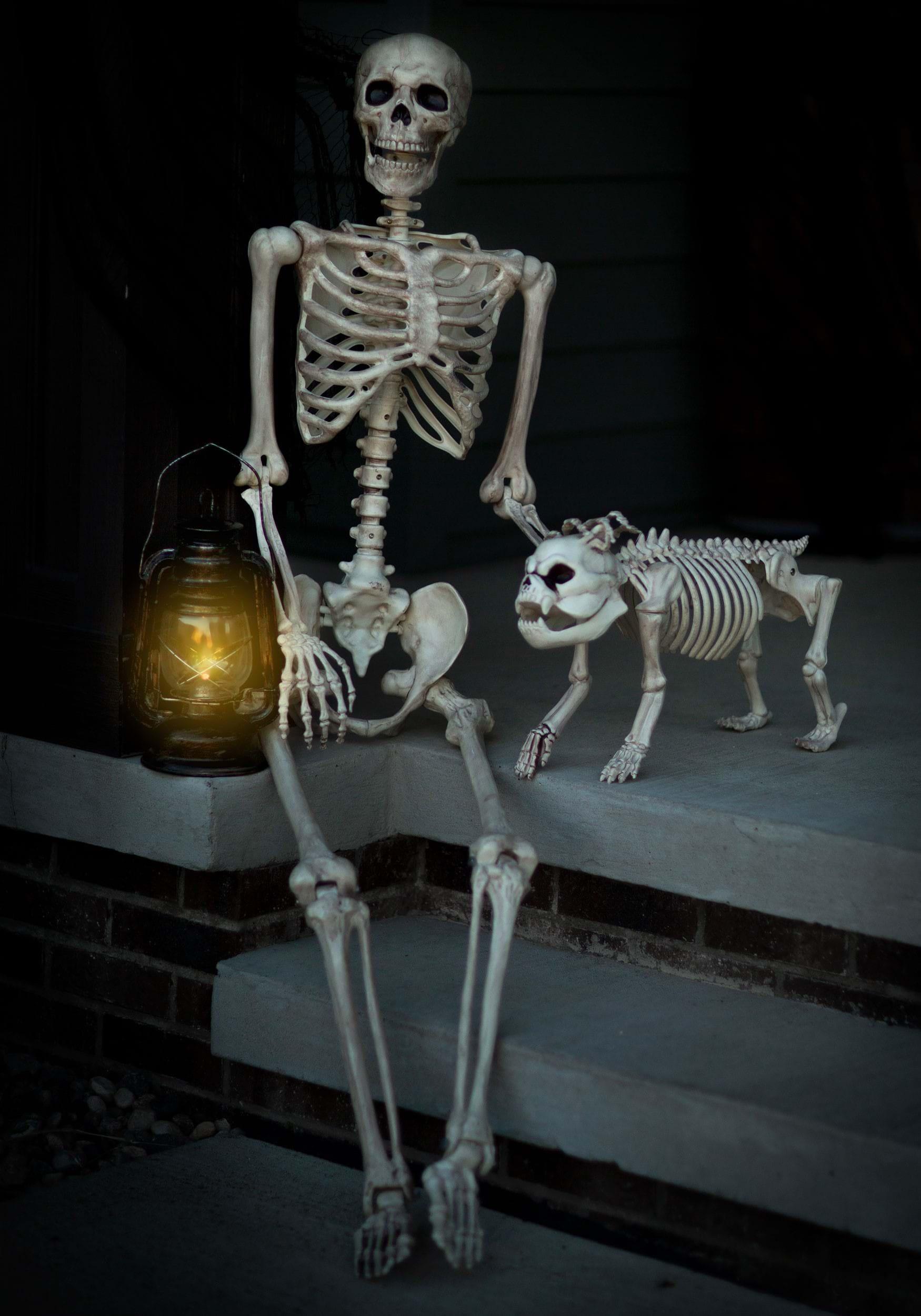 Lifesize Posable Skele...