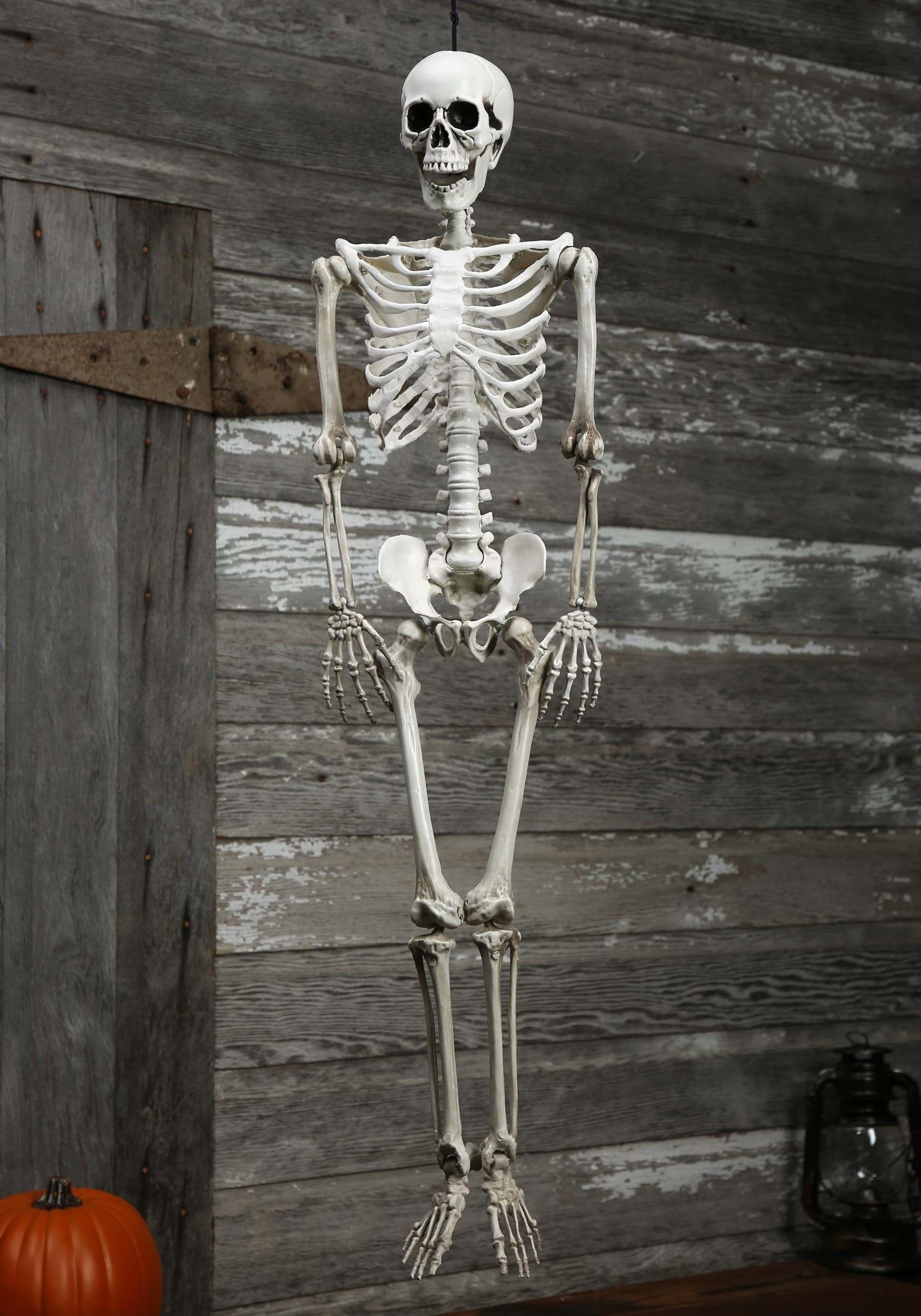 plastic realistic skeleton - Halloween Skeletons