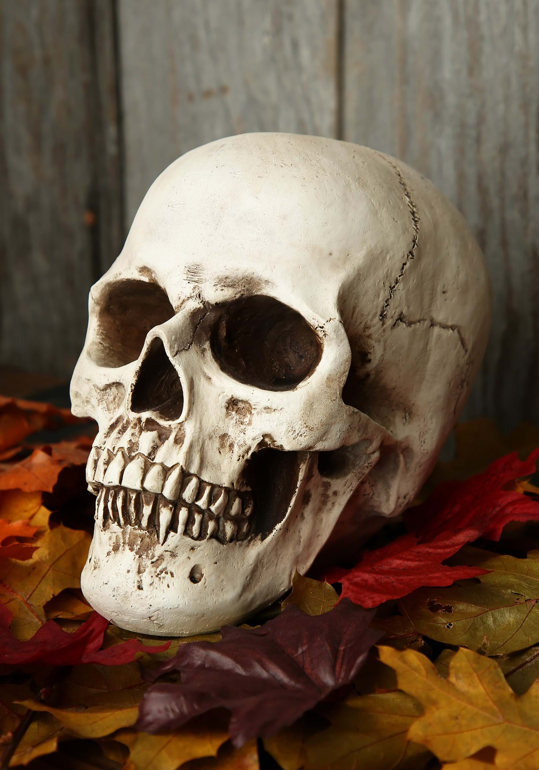 Halloween skull decorations - Deluxe Realistic Skull