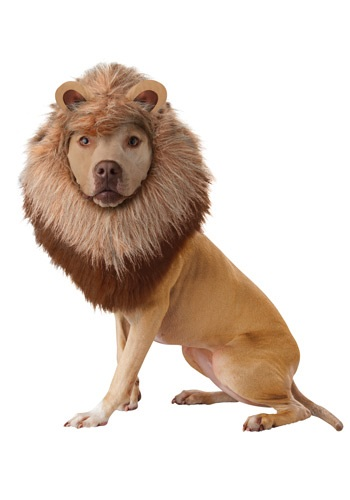 Click Here to buy Lion Pet Costume from HalloweenCostumes, USA Funds & Shipping