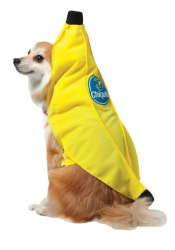 Click Here to buy Chiquita Banana Dog Costume from HalloweenCostumes, USA Funds & Shipping