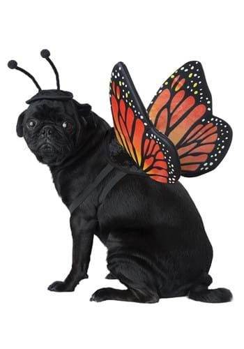 Click Here to buy Pet Butterfly Costume from HalloweenCostumes, USA Funds & Shipping