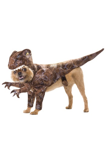 Click Here to buy Pet Raptor Costume from HalloweenCostumes, USA Funds & Shipping
