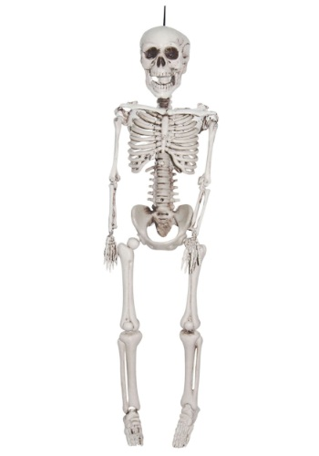 He's got a bone to pick with you! This 20 Inch Plastic Realistic Skeleton can be used as an indoor or outdoor decoration. #%20