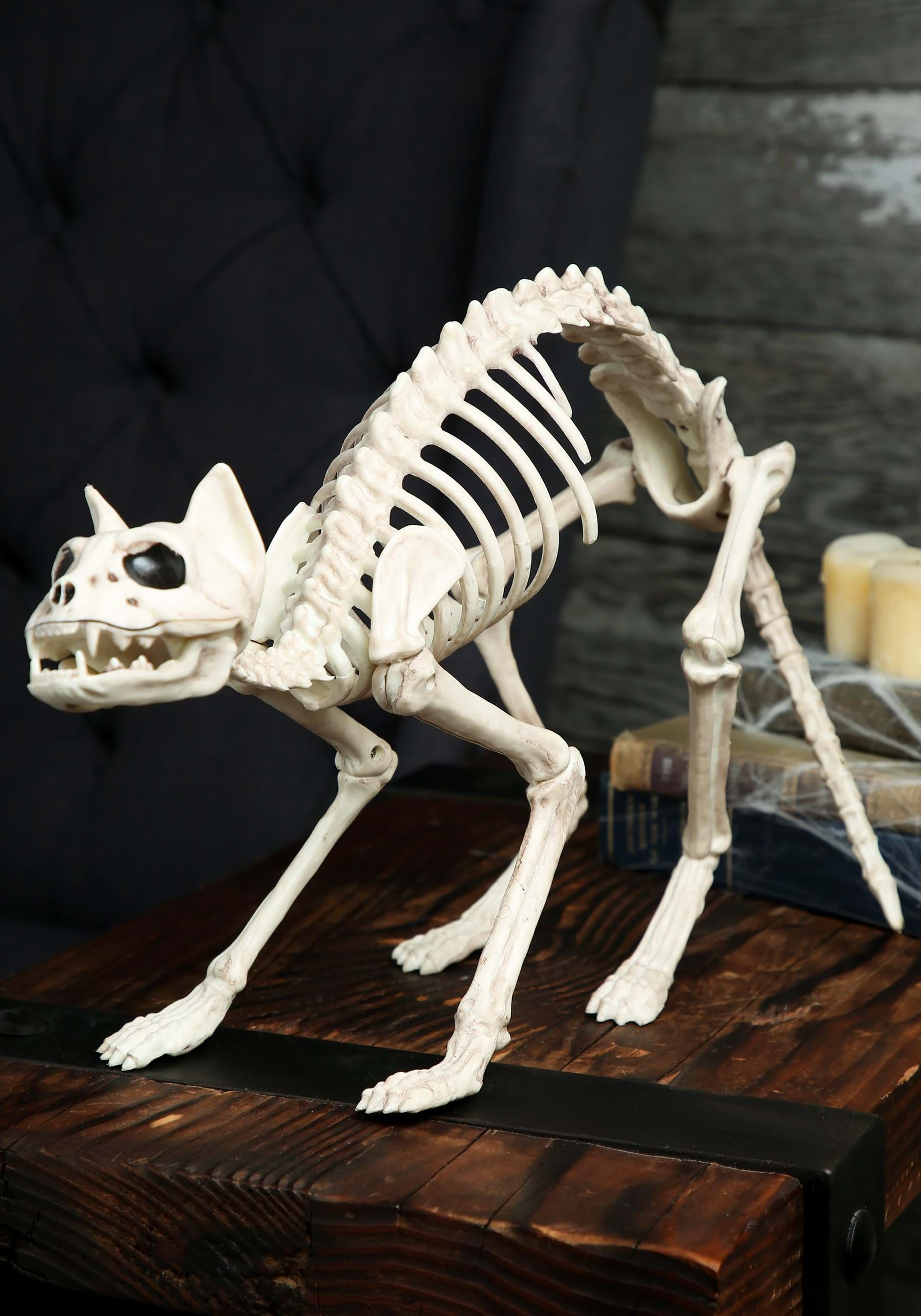 skeleton cat - Halloween Cat Decorations