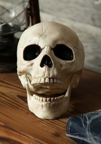 Skull with Movable Jaw