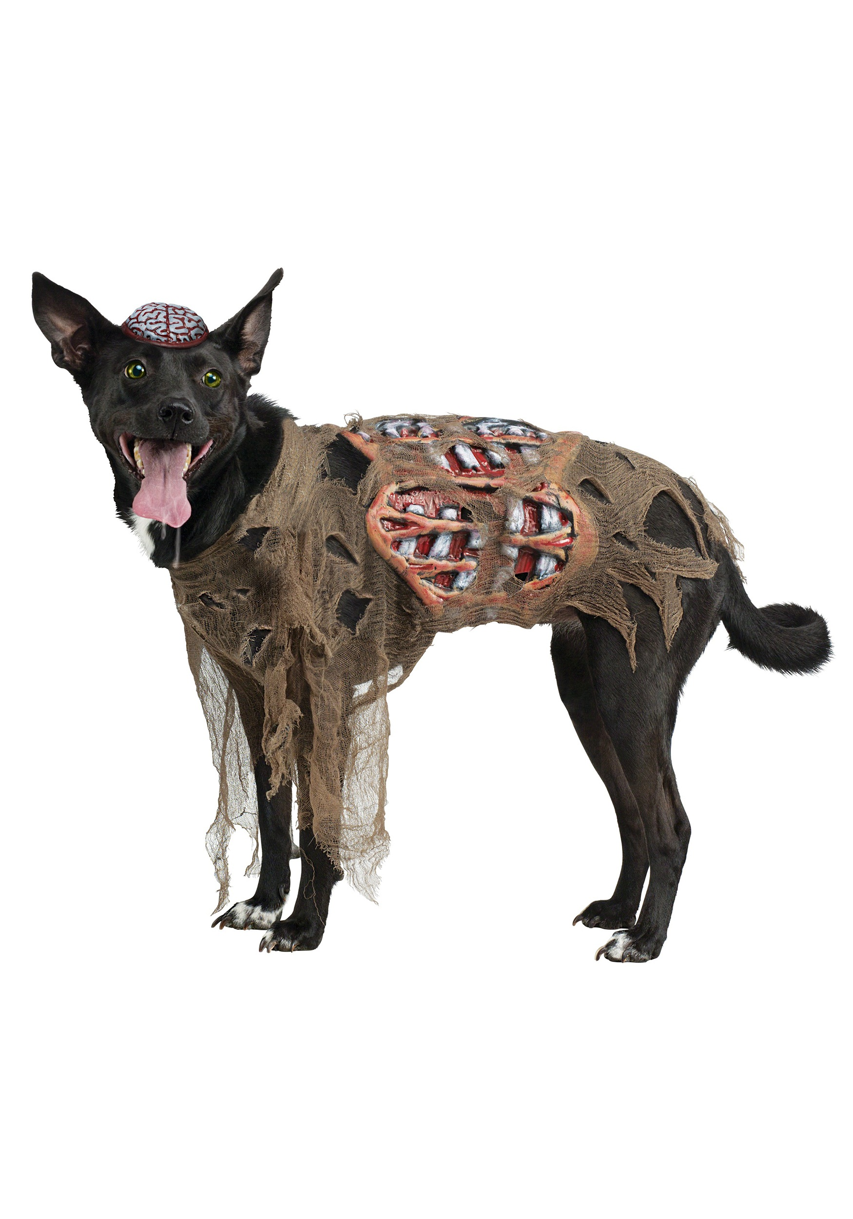 Homemade Costumes for Pets - Costume Works (page 2/64) |Diy Zombie Dog Costumes