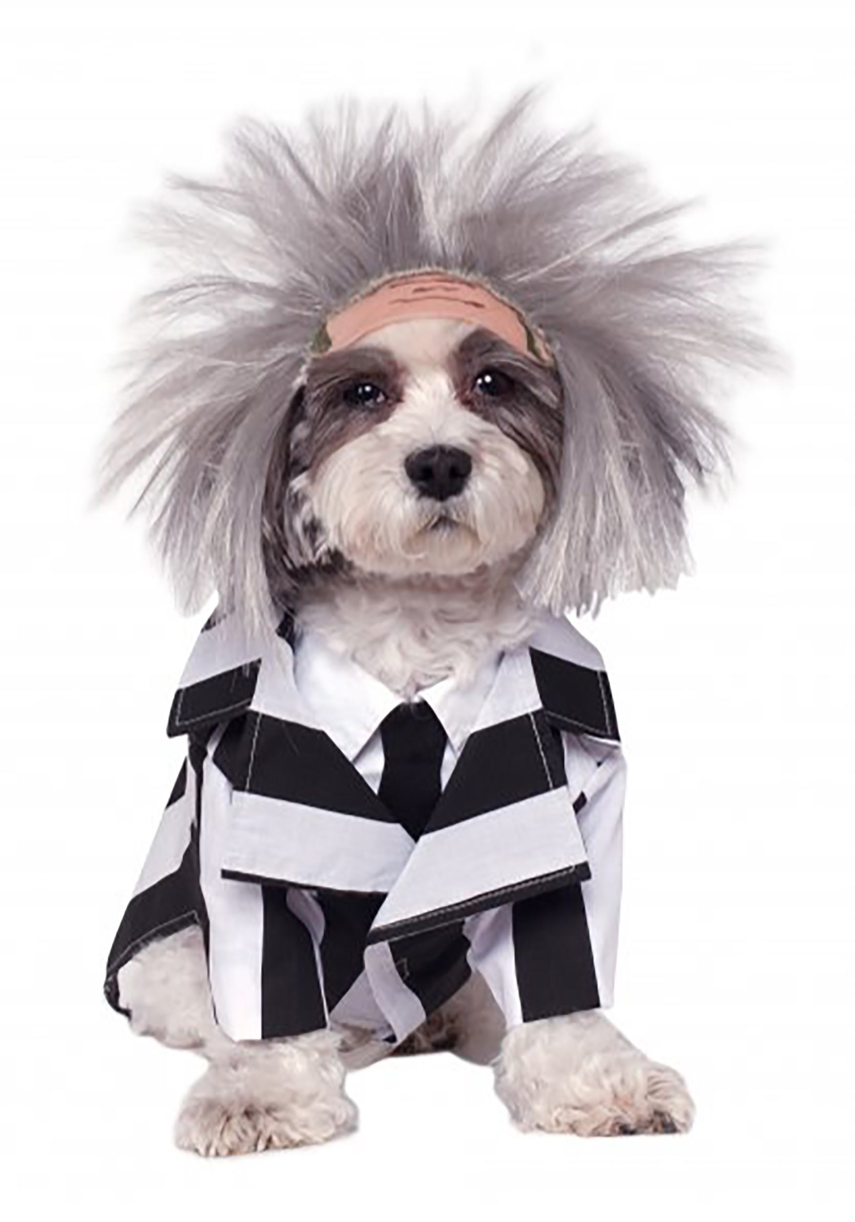 Beetlejuice Pet Costume  sc 1 st  Halloween Costumes & Pet Costumes - Cat u0026 Dog Halloween Costumes - HalloweenCostumes.com