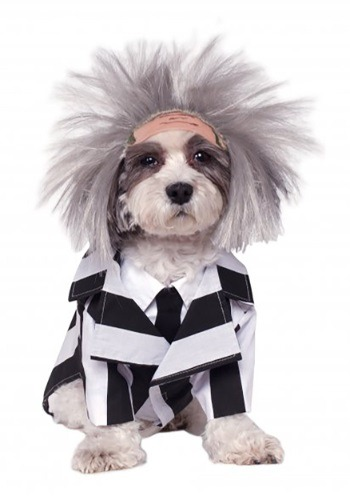 Click Here to buy Beetlejuice Pet Costume from HalloweenCostumes, USA Funds & Shipping