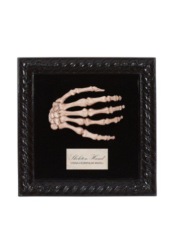 Image of Lab Specimen Skeleton Hand