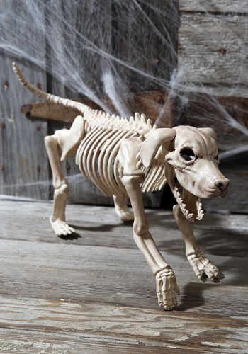 Click Here to buy Beagle Bonez 20  Skeleton Dog from HalloweenCostumes, USA Funds & Shipping