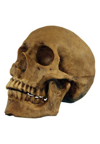 Click Here to buy Resin Cranium Prop from HalloweenCostumes, USA Funds & Shipping