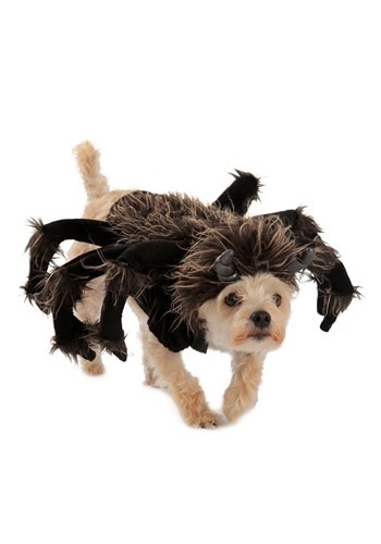 Tarantula Dog Costume By: Princess Paradise for the 2015 Costume season.