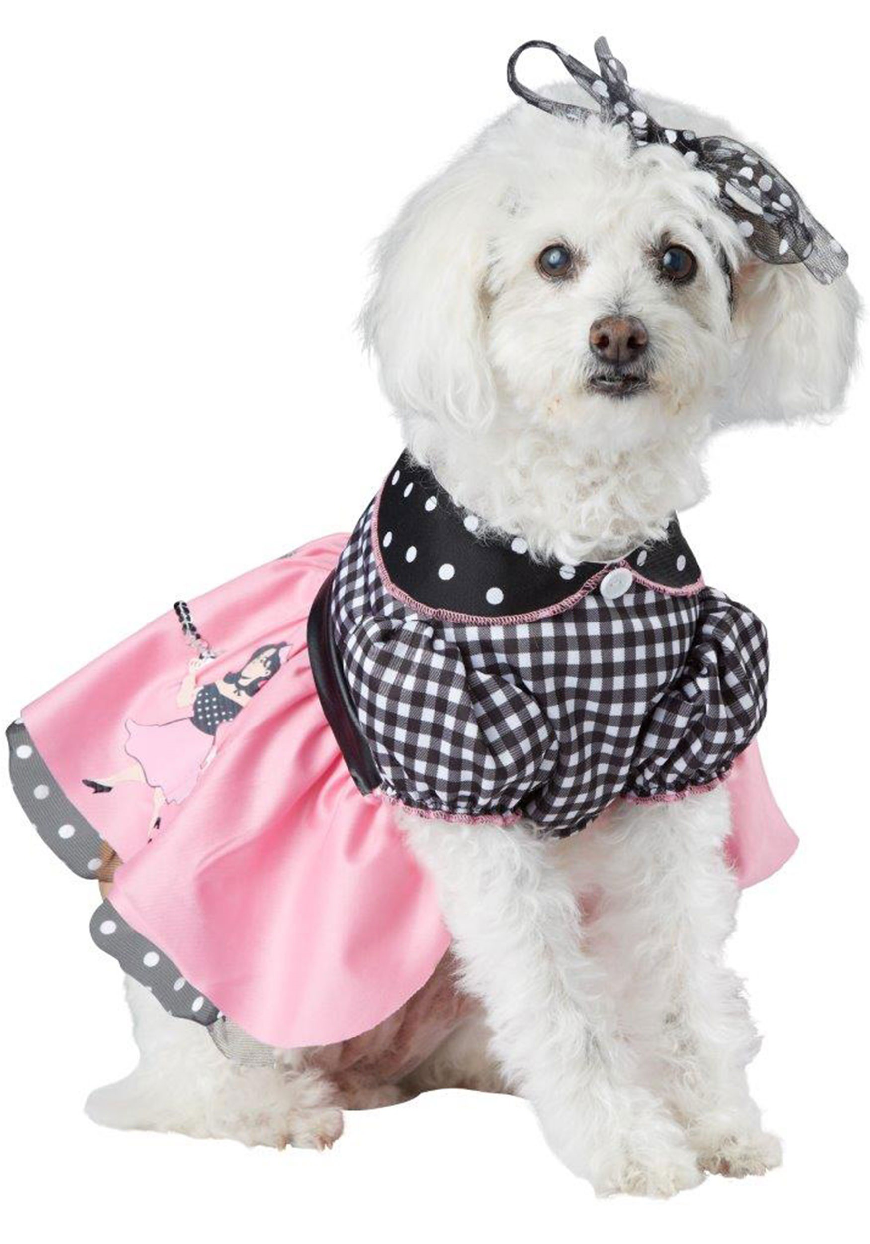 Simple Outfit Army Adorable Dog - poodle-skirt-dog-costume  Perfect Image Reference_822925  .jpg