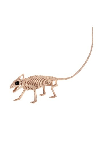 Skeleton Lizard