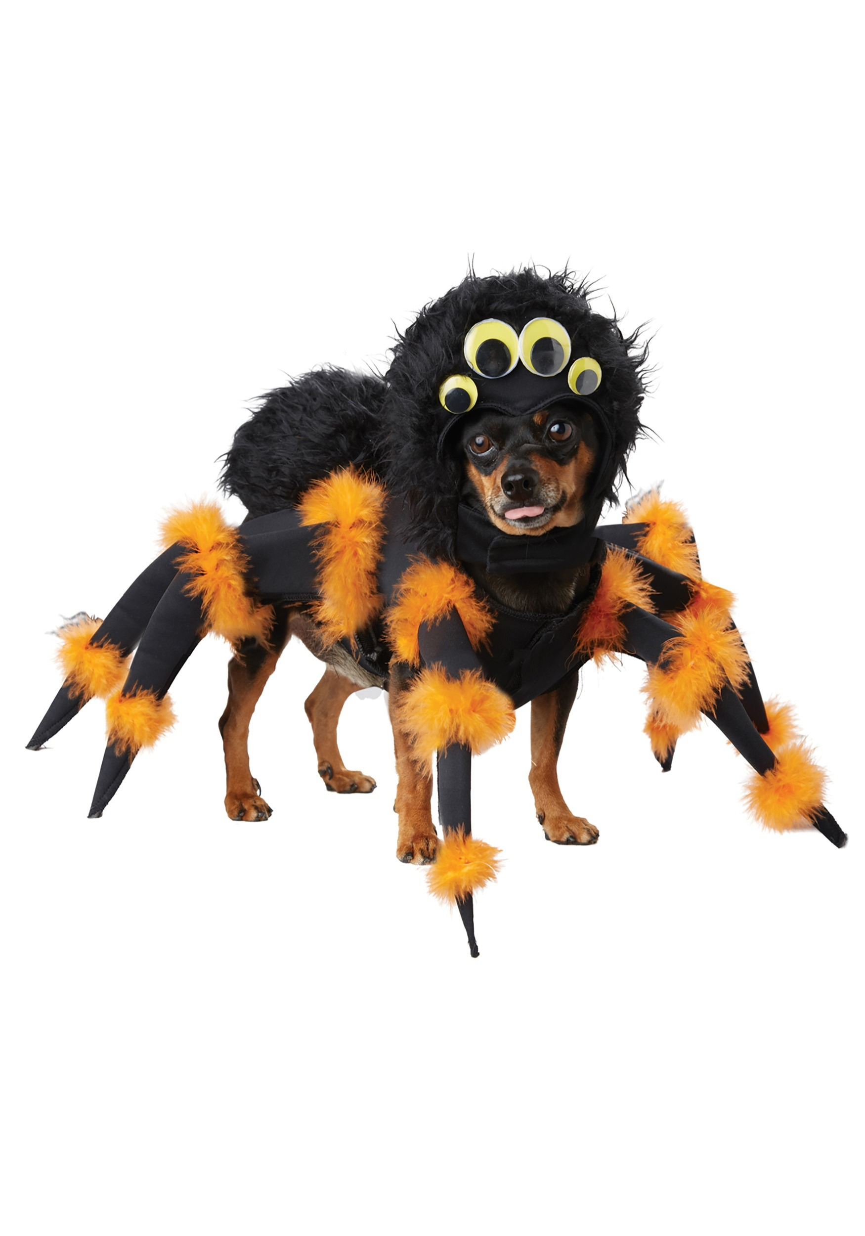 Amy's Daily Dose: Hilarious Pet Costumes for Halloween |Pet Halloween Coustumes