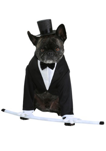Image of Formal Tuxedo Dog Costume