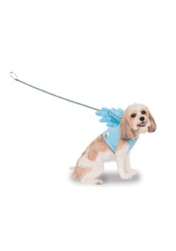 Pet Rainbow Dash Costume