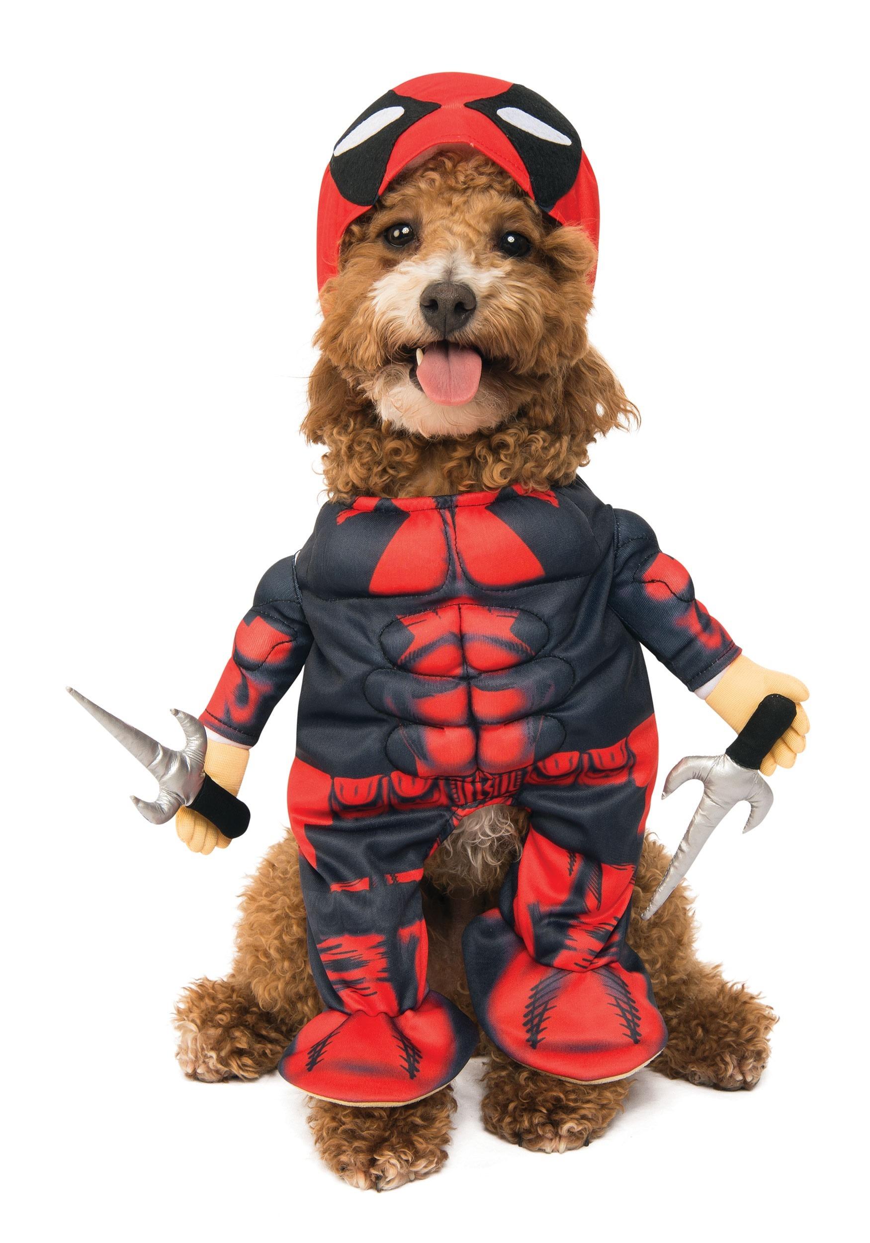 Image result for deadpool dog costume
